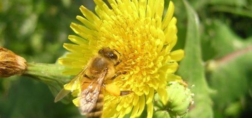 En Argentina se consumen 200 gramos de miel per cápita, mientras que en Europa se supera el kilo