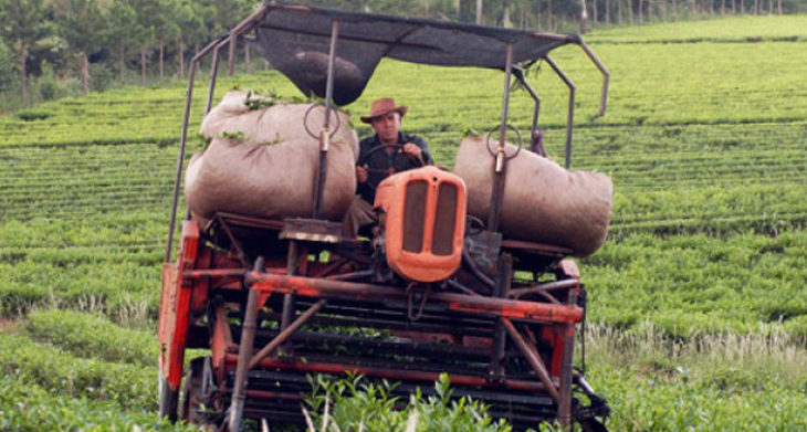 La industria tealera misionera busca consolidar el consumo interno de té
