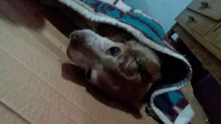 Crueldad animal: un perro murió tras ser despellejado