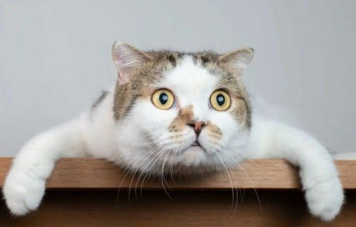 Gatos en cuarentena: cómo identificar problemas de ansiedad y estrés