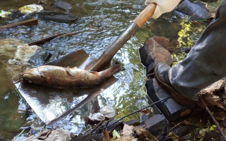 El martes se conocerían los resultados de la investigación sobre la sustancia que contaminó el Arroyo Vicario y  generó la pérdida de más de 450 kilogramos de peces
