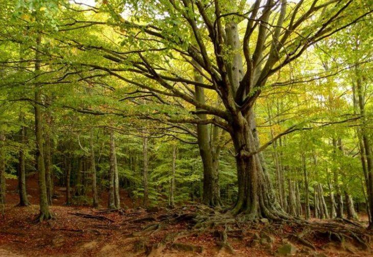 El plan de la Unión Europea para proteger la biodiversidad y para frenar la extinción de especies