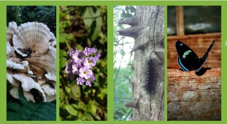 Día Mundial de la Biodiversidad: el rol de los educadores ambientales para fortalecer la conservación de las áreas naturales protegidas en Misiones