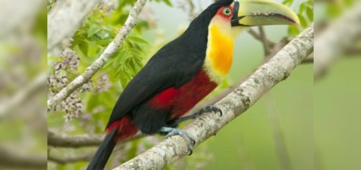 Oscar Herrera Ahuad recordó el Día Mundial de la Biodiversidad