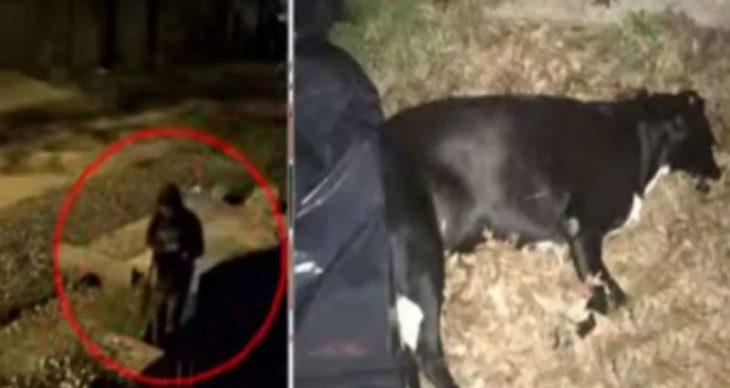Un ex diputado de San Isidro asesinó a la perrita callejera del barrio y quedó filmado