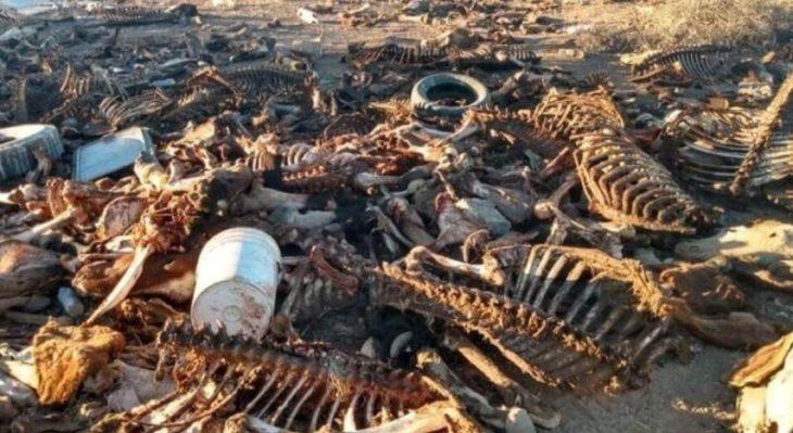 Más de 40 caballos descuartizados fueron encontrados en un descampado