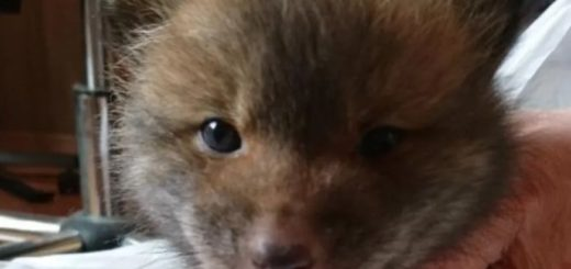 """Rescató a un """"perrito"""" de la calle para darlo en adopción y se llevó una sorpresa"""