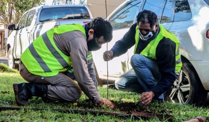 Posadas: más de 50 árboles fueron plantados en lugares donde hubo extracciones