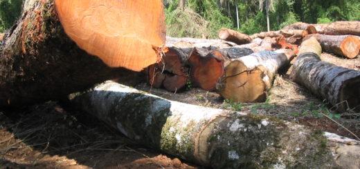 """#SemanaMundialdelAmbiente: """"La oportunidad para acrecentar el compromiso de ordenación forestal de los bosques en la región"""""""