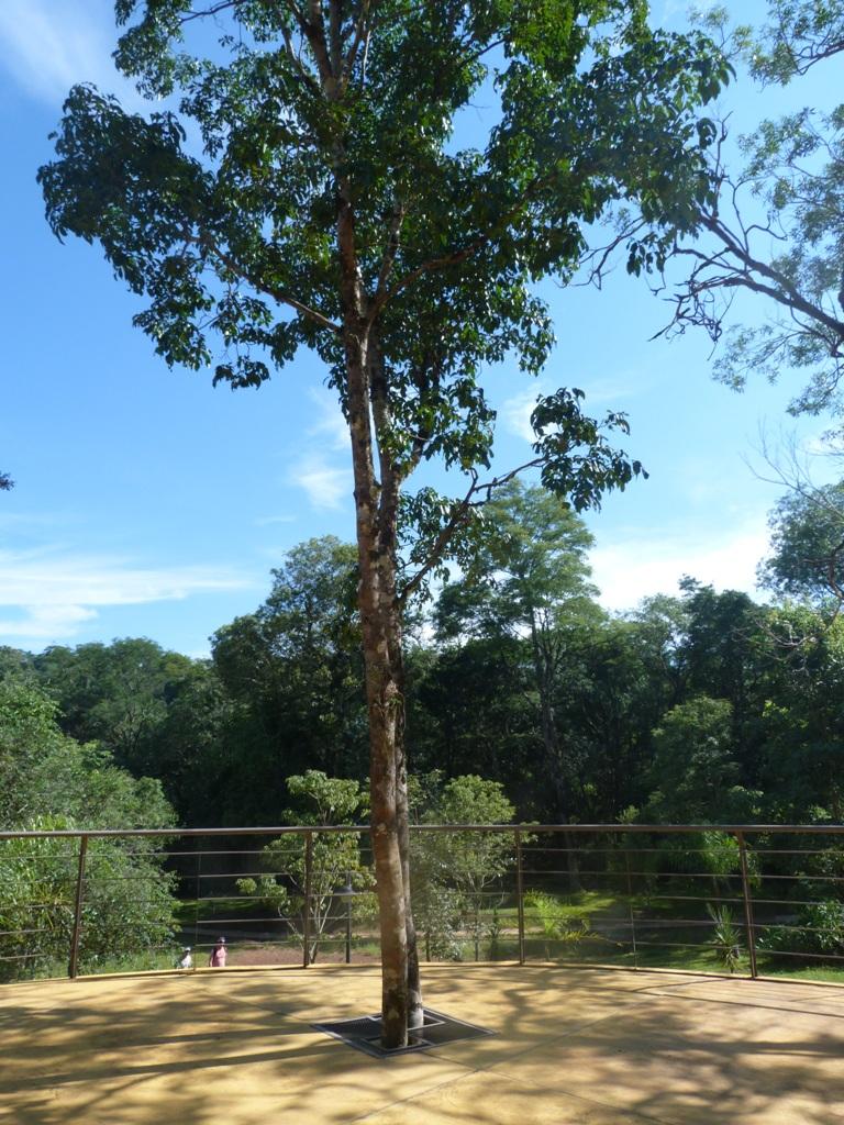 #SemanaMundialDelAmbiente: Las áreas naturales protegidas, un entorno de biodiversidad de la Selva Misionera por redescubrir post pandemia por COVID-19