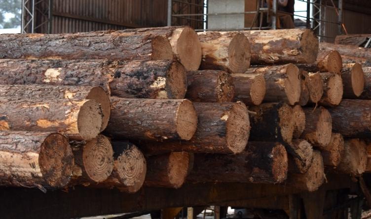 Foresto-industria: Román Queiroz, de AMAYADAP, es el nuevo presidente de la FAIMA y por primera vez la conducción nacional será liderada por un dirigente del NEA