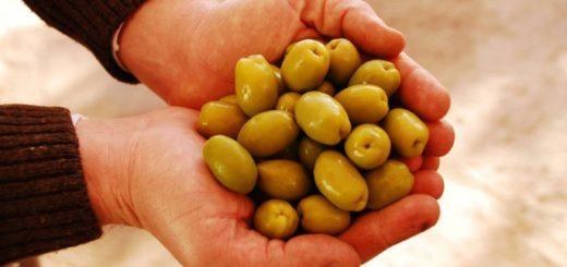 La Rioja celebró la Fiesta Nacional de la Olivicultura de una forma particular