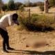 Indignación: denuncian que tiraron a una perra para que la comiera un cocodrilo