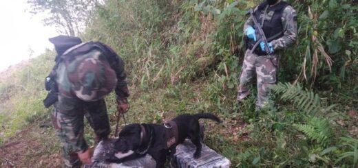 Prefectura decomisó casi 80 kilos de marihuana en Puerto Rico