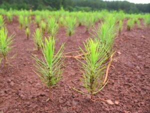Ambiente, bosques y foresto-industria:Lo mejor y lo peor del primer semestre 2020 desde la visión de referentes de la cadena de valor de una actividad esencial en Misiones