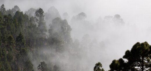 ¿Cuál es el fenómeno natural que causa tanta humedad en Misiones y por qué brota agua de las paredes y pisos?, vea algunos trucos para aliviar la situación