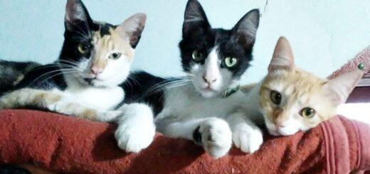 """Posadas: denunció que sus vecinos la amenazan con herir a sus gatos y pidió ayuda porque """"no quiere tener que regalarlos"""""""