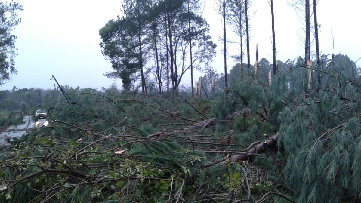 Árboles caídos e inconvenientes en el sistema eléctrico: los efectos de la tormenta en Montecarlo