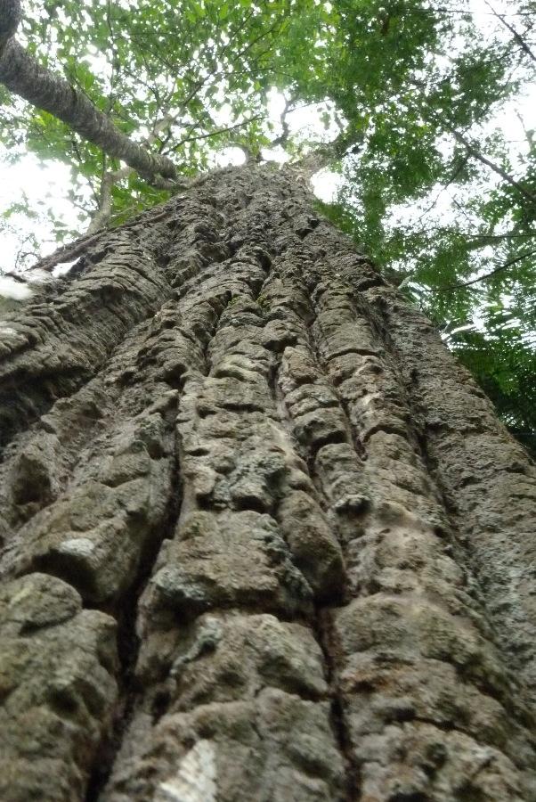 """Áreas Naturales Protegidas, el tesoro """"verde"""" de Misiones por la protección de hábitats y especies en peligro de extinción"""