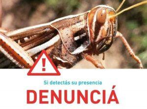 SENASA pide a productores del NEA que denuncien eventual presencia de mangas de langostas, cuyo alerta alcanza hasta Córdoba