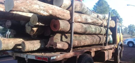 Bosque nativo: Ecología retiene transporte forestal de carga de rollos sobre la ruta Costera 2 y en Fracrán