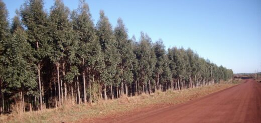 Corrientes: Nación destinará más de 29 millones de pesos para el pago de la deuda de planes forestales de productores