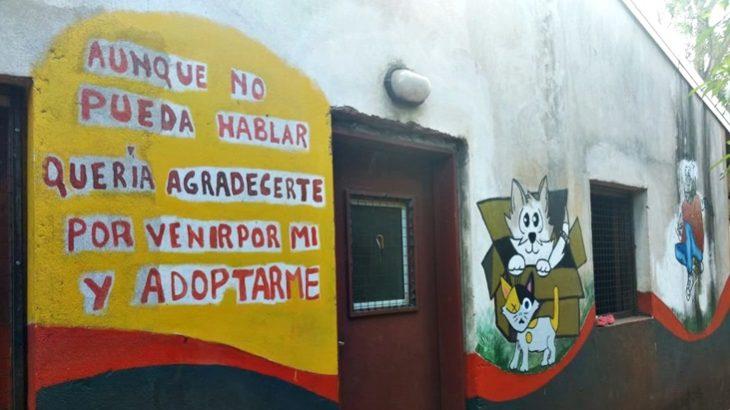 """El Refugio: incentivan la adopción responsable de sus rescatados y llaman a colaborar con la campaña """"Por una cucha calentita"""""""
