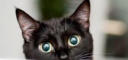 Italia en alarma por un gato que murió tras morder a su dueña y estaba infectado por un rarísimo virus