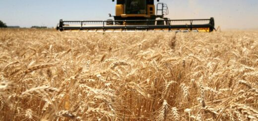 Debido a la falta de lluvias en Argentina, se sembrará menos trigo de lo esperado