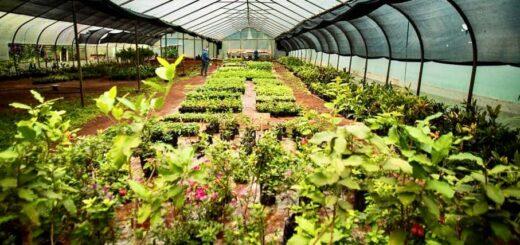 Eldorado: el Vivero Municipal continúa con la reproducción de plantines florales para embellecer la ciudad