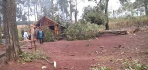 Una nena murió aplastada por un árbol durante el temporal que azotó a la región