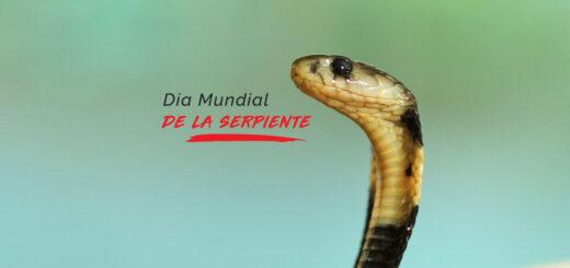 ¿Por qué se celebra hoy el Día Mundial de la Serpiente?