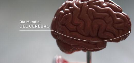 ¿Por qué se celebra hoy el Día Mundial del Cerebro?