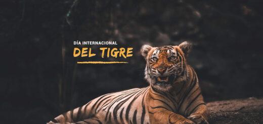 ¿Por qué se celebra hoy el Día Internacional del Tigre?
