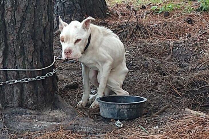 La dolorosa historia de Héroe, el perro que vivió cuatro años encadenado a un árbol