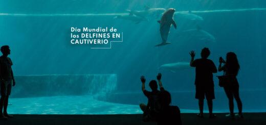 ¿Por qué se celebra hoy el Día Mundial de los Delfines en Cautiverio?