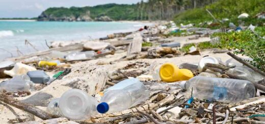 Los Parques Nacionales dejarán de emplear plásticos de un solo uso