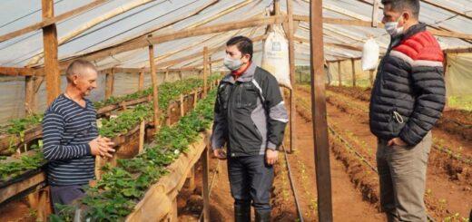 Colonias de productores del norte de Misiones fueron visitadas por el IFAI
