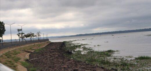 Nuevamente los camalotes se hicieron presentes en las orillas del río Paraná