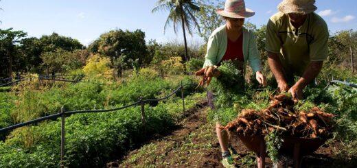 Día de la Agricultura Nacional: en Misiones destacan el valor de la producción familiar reconocida por ley