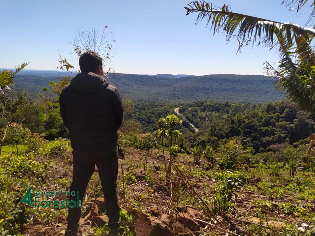 """Para Patricio Lombardi poner en valor la biodiversidad de Misiones """"no implica ni vender ni ceder nuestra soberanía"""""""