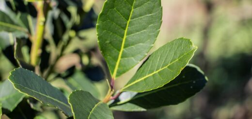 Con respaldo científico, el INYM impulsa la optimización del secado y la calidad de la yerba