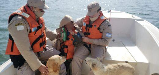 Bruno, el niño que estuvo desaparecido casi 20 horas en Posadas, reveló que pasó la noche abrazado a dos perros