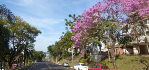 Lapachos en flor pintan de colores las calles de Posadas