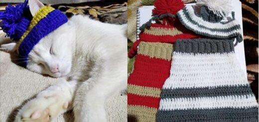 """Posadas: aprendió a hacer crochet y vende abrigos de gatitos para costear los gastos de la operación de """"Bebé"""""""