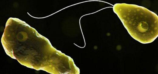 "Estados Unidos: confirmaron un caso de ameba ""comecerebros"" en Florida"