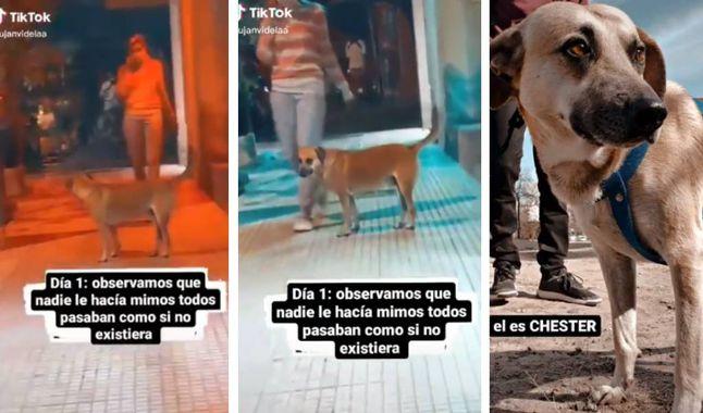 Viral en redes: conocé la historia de Chéster, el perro al que todos ignoraban