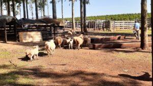 """Productores Ovinos apostoleños: """"Después de 20 años estando en el sector productivo, esta es la primera vez que nos reunimos los productores ovinos"""""""