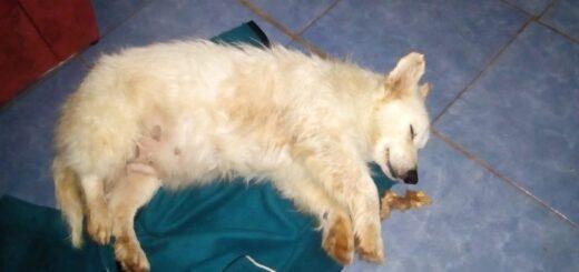 Detienen a un joven que golpeó salvajemente a una perra en Gobernador Roca
