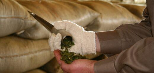 Yerba mate, el alimento que sigue sumando calidad y beneficios a la salud